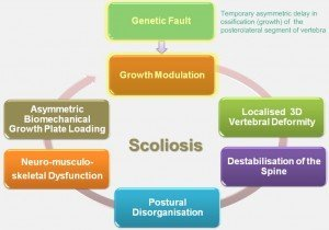 Vicious-Cycle-of-Scoliosis